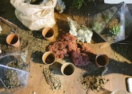 incubating plants