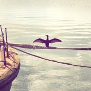 bird near boat