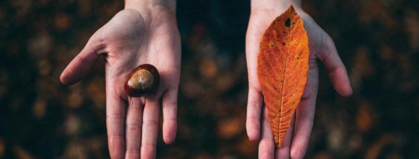 seed to leaf